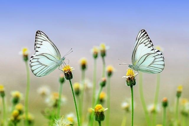 Butterfly JPEG
